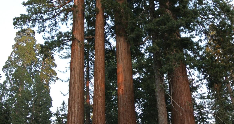 Sequoia National Park heiditravelsusa.nl