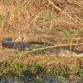 Ervaar en beleef de Everglades in Florida