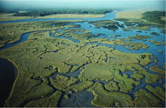 Everglades River of grass met dank aan Columbia Water Center